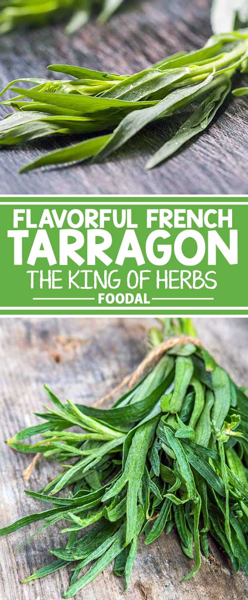 Flavorful French Tarragon: The King of Herbs