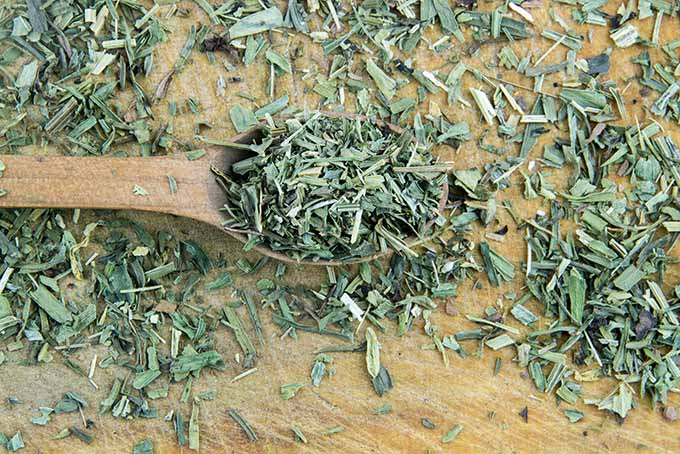 Dried tarragon is a useful herb to store on your spice rack. | Foodal.com