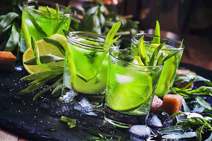Make a fresh cocktail using the herb tarragon! | Foodal.com