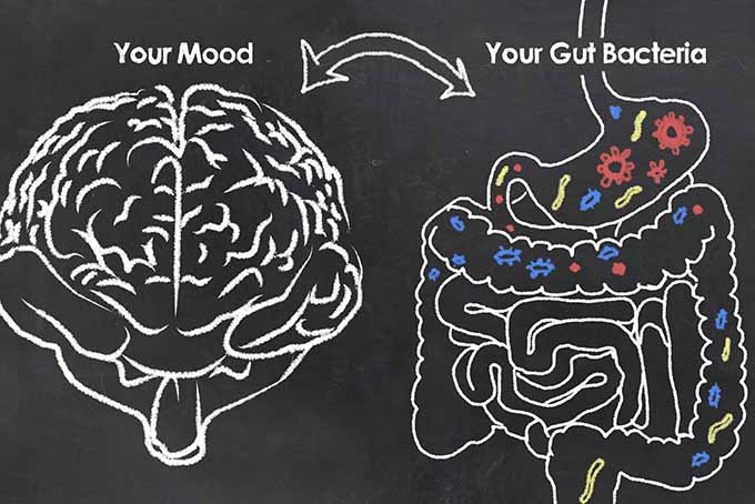 Your brain and digestive system may have a connection! | Foodal.com