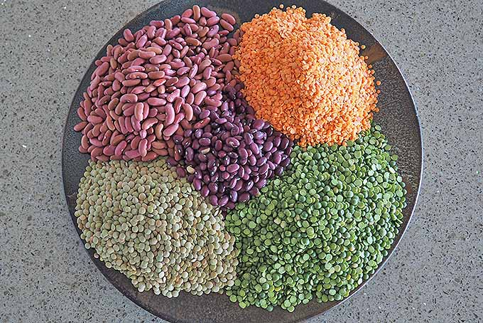 A colorful medley of dried legumes. | Foodal.com