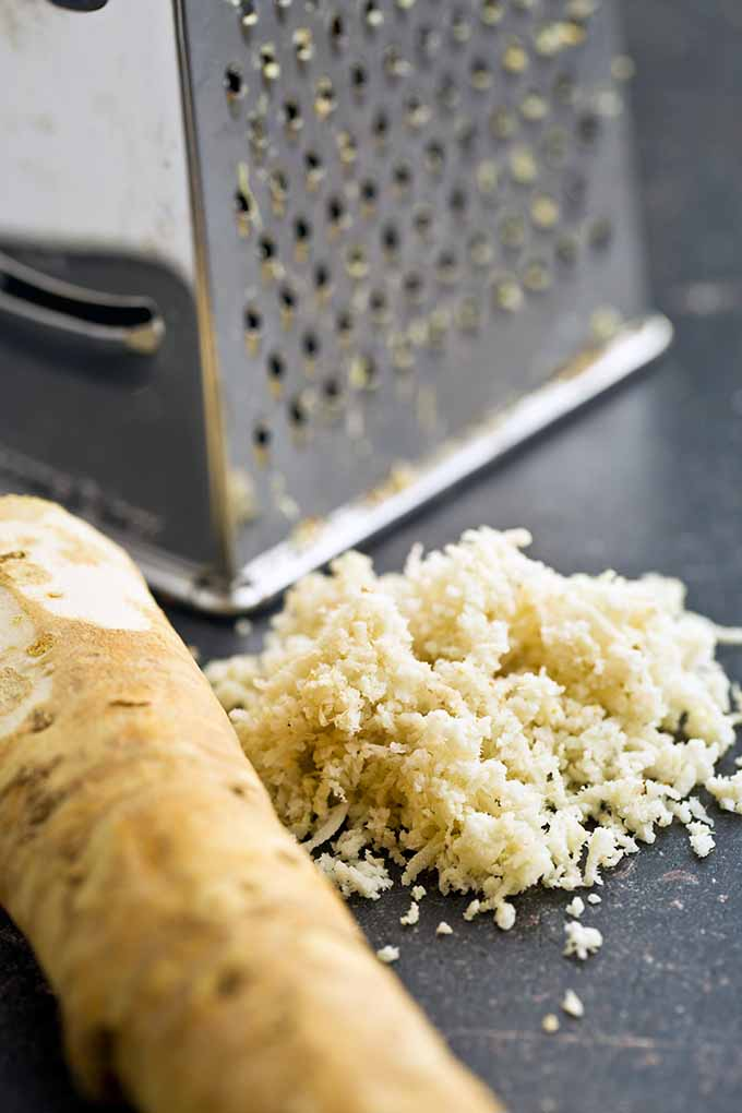 What's the best way to prep horseradish? We have all the answers in our article. Learn more about this spicy root here: https://foodal.com/knowledge/herbs-spices/horseradish-fiery-root/
