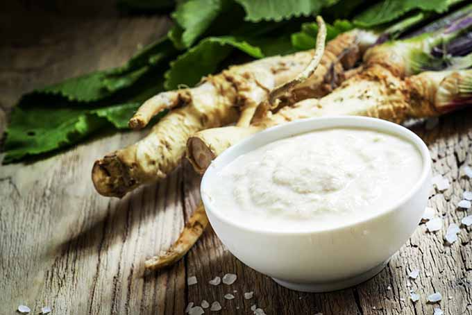 Horseradish is the perfect spicy ingredient to mix into creamy side dishes. | Foodal.com