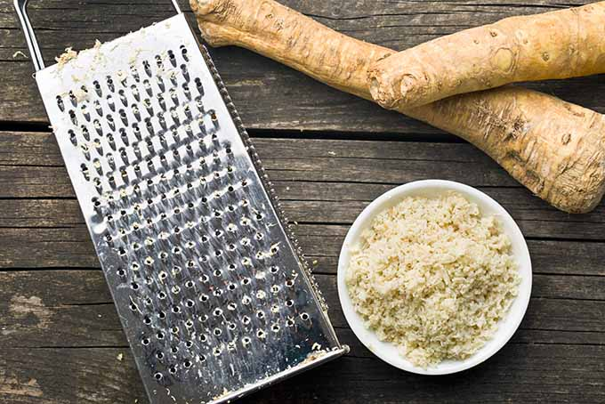 Grating fresh horseradish to use in a variety of recipes. | Foodal.com