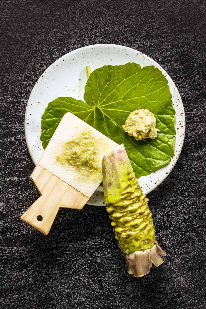 Did you know that your favorite spicy green paste you like with your sushi comes from an actual plant? Get to know all about this naturally spicy ingredient in our article. Read more now: https://foodal.com/knowledge/herbs-spices/spicy-wasabi-rare-rhizome/
