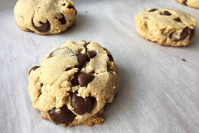 Paleo Chocolate Cookies | Foodal.com