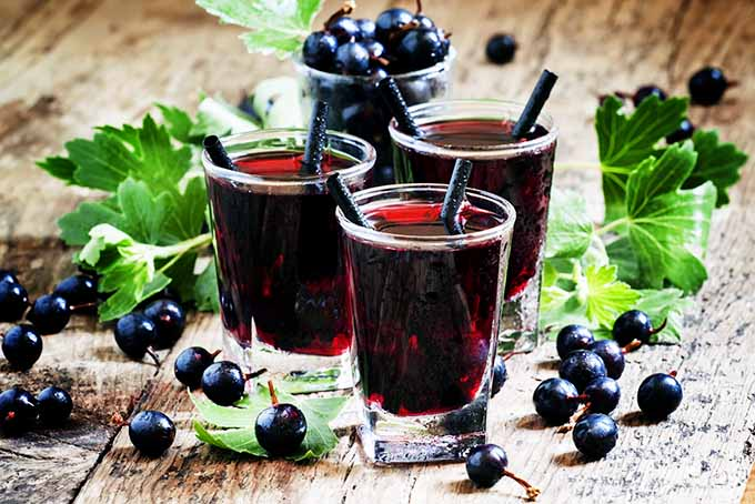Blackcurrant Beverages | Foodal.com