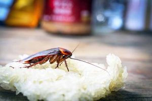 Get Rid of Cockroaches in Your Kitchen – For Good!