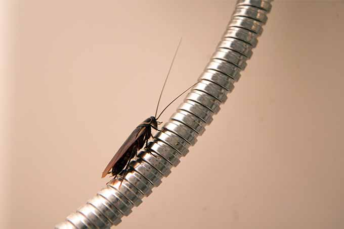 Prevent cockroaches from invading your kitchen | Foodal.com