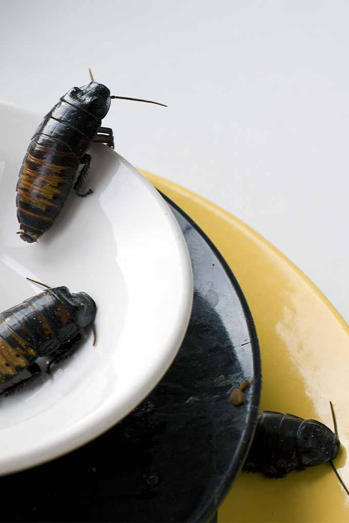 How To Get Rid Of Cockroaches In Your Kitchen Foodal