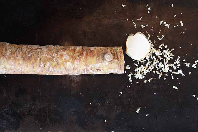 One Horseradish Root | Foodal.com