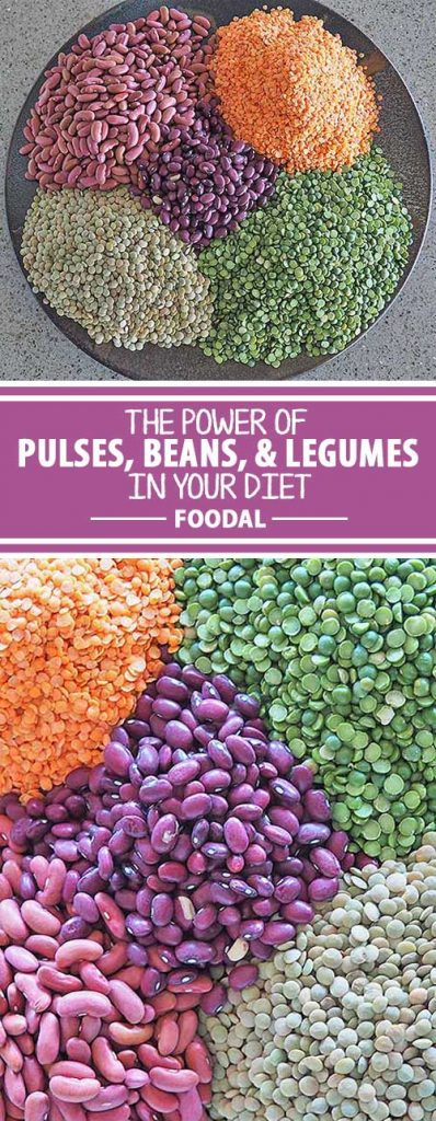 Pulses are an important part of the legume family – the dried, edible seeds of certain species that provide us with excellent sources of protein and fiber, as well as minerals and vitamins. And growing legumes actually nourishes the soil instead of depleting it! Read all about these important dietary ingredients right here on Foodal.