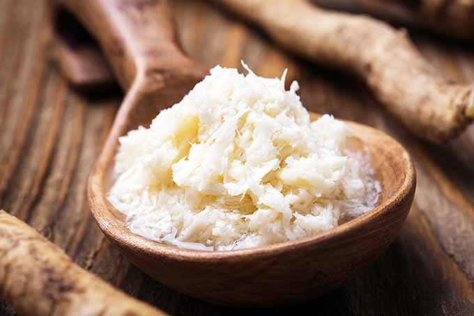 Spoonful of Grated Horseradish | Foodal.com