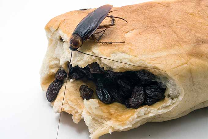 Banish cockroaches from your kitchen with these expert tips | Foodal.com