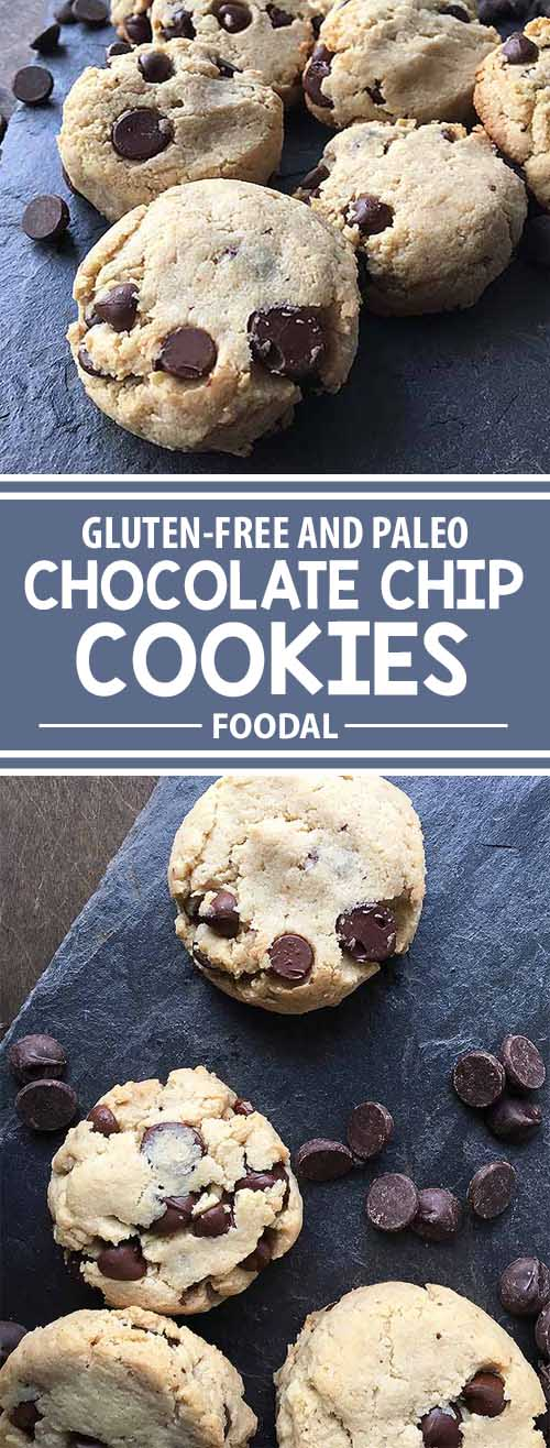 Need something gluten-free for a chocolate chip fix? Try our recipe for paleo chocolate chip cookies, made with no gluten, dairy, or eggs. With simple ingredients like almond flour, coconut oil, and maple syrup, you can still enjoy one of your favorite handheld desserts, all the while maintaining a clean and healthy diet! Get the recipe now on Foodal.