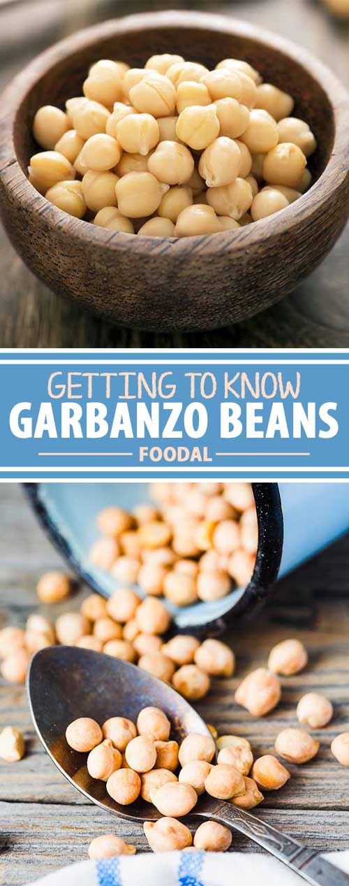 Getting to Know Garbanzo Beans: A Closer Look at the Cute Chickpea