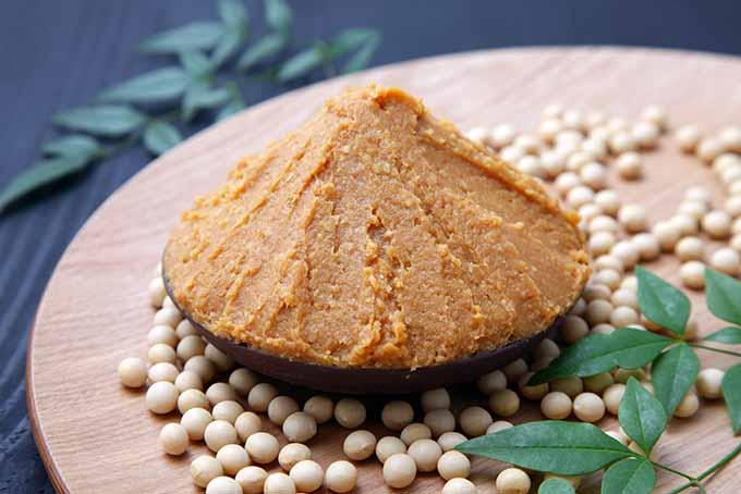 Japanese Miso Paste   Foodal.com