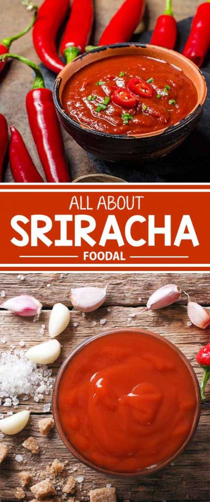 Sriracha's sweet-spicy-tangy flavor has achieved cult-like status in homes and restaurants across America. Now on Foodal, learn about the origins of this delicious sauce with Chinese-Vietnamese-Thai roots, and learn how to use it.