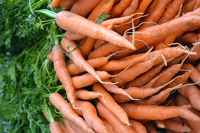 Read this Foodal article to learn what foods besides carrots are good for your eyes | Foodal.com
