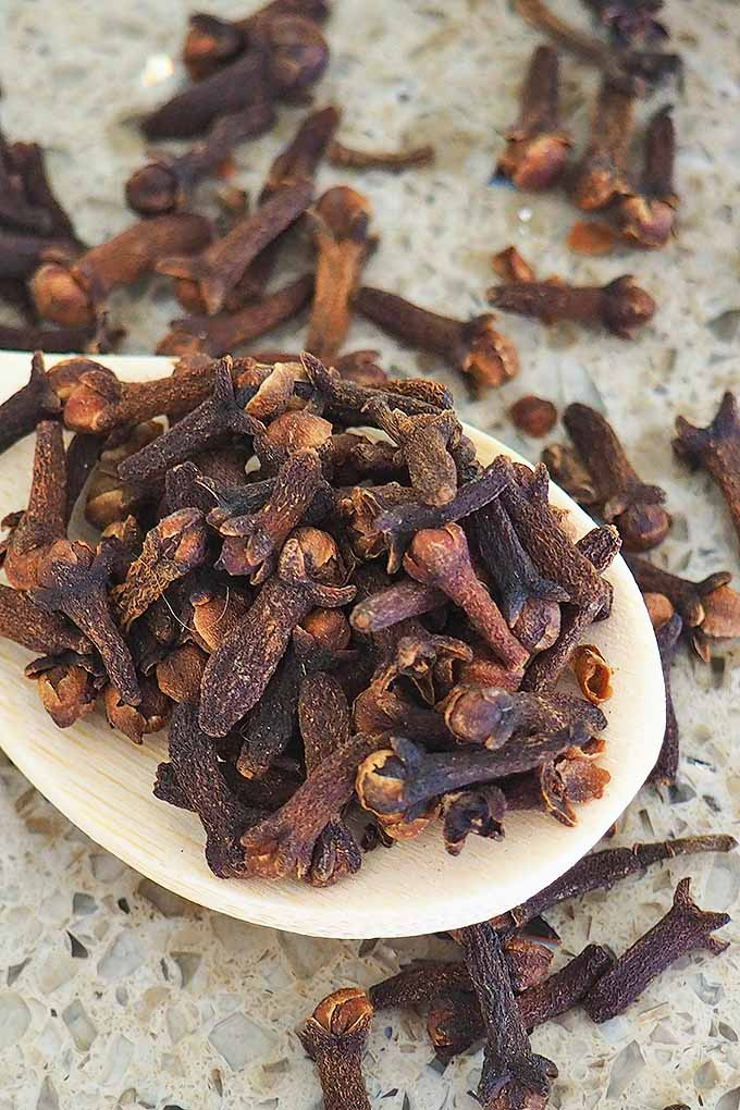 One of the staples in every spice rack, cloves add bright, warm flavors to numerous dishes. Get all the info you need here: https://foodal.com/knowledge/herbs-spices/fragrant-sweet-cloves/