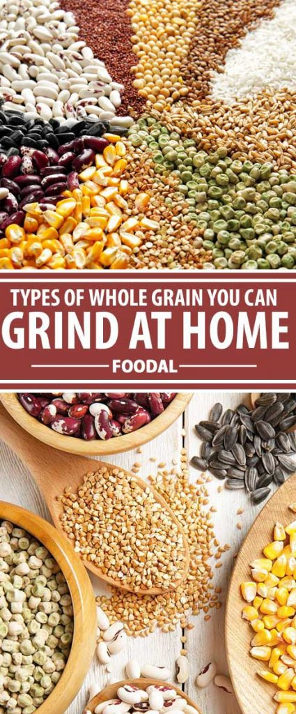Freshly milled flour has a lively taste and superior nutrition compared to refined flour. Check out our whole grain purchasing guide now for all the details and links you'll need to enjoy bulk savings on dried grains, seeds, and legumes! Read more now on Foodal.