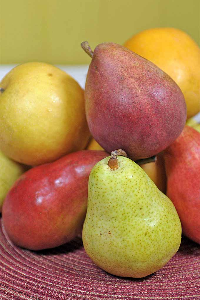 Don't you love a juicy, delicious pear, perfectly ripe and selected at the peak of the season? We'll teach you how to choose, store, ripen, and enjoy this delicious fruit: https://foodal.com/knowledge/how-to/store-pears/