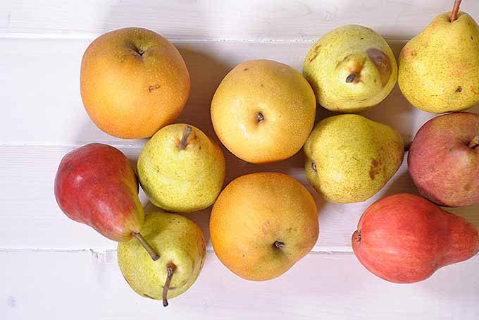 How to Store Different Types of Pears | Foodal.com