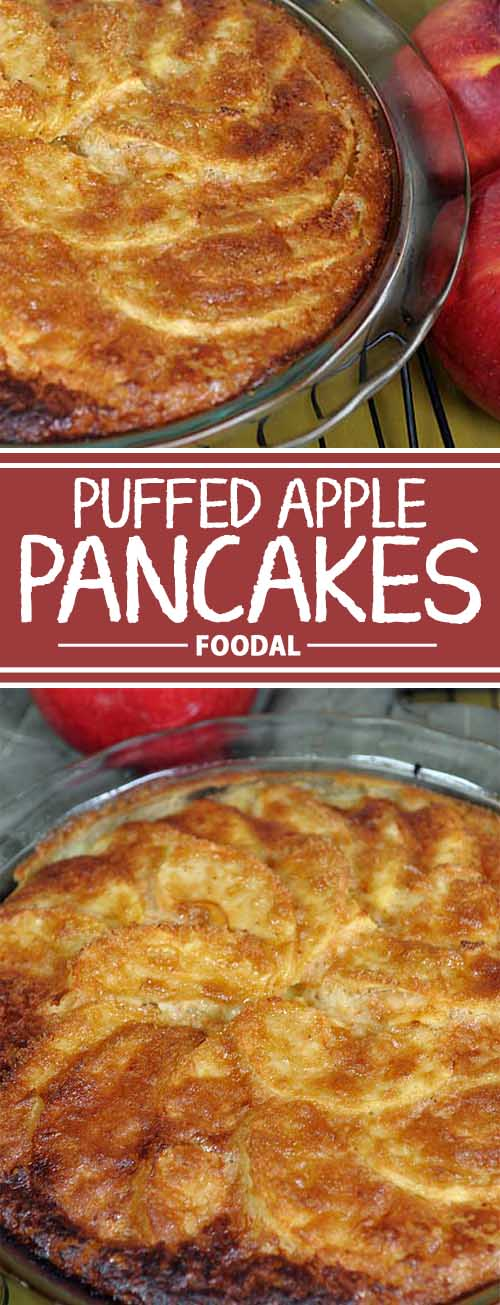 This gorgeous puffed apple pancake is a super easy to make treat using fresh honeycrisp apples and makes the perfect fall comfort food. The egg batter makes it like a combo of bread pudding and apple pie. Get the recipe now on Foodal!