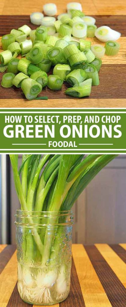 Whether you call them scallions or green onions, these mild alliums add their distinctive flavor to numerous dishes that range from salads and soups to compound butters and roasted meats. Read along now for all the info on how to select, store, and prepare these pretty flavor bombs!