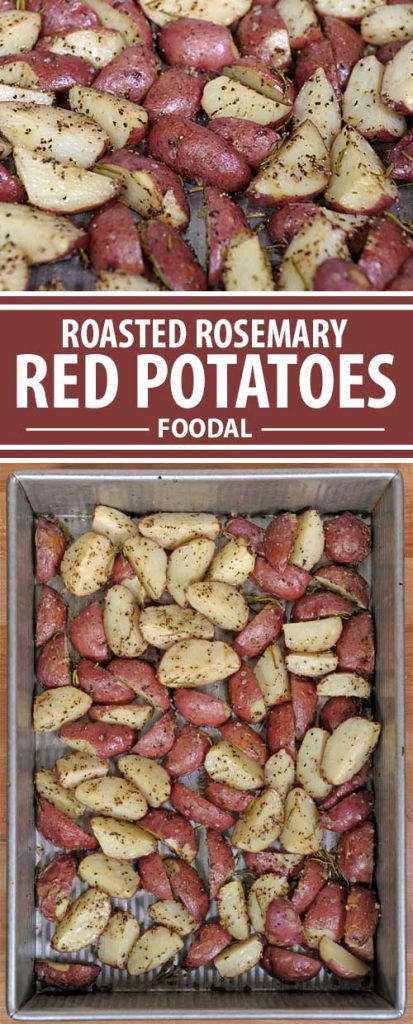 Often overlooked as just a side dish or an unimportant bit of a meal, roasted red potatoes are good enough to eat alone - and you just might do that. Get this tasty and colorful recipe on Foodal now!