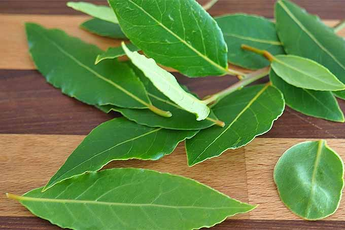 Learn how to use bay leaves effectively in your cooking | Foodal.com
