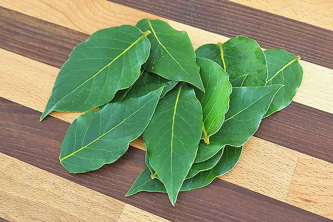 Fresh bay leaves freeze well | Foodal.com