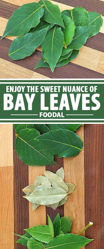 Bay leaves are used in several global cuisines because of their subtle, herbal flavor and their delicate, lightly floral fragrance. A must for slow cooking stews, soups, and braises, they're also a natural in quicker dishes like fish, poultry, pasta, and risotto. Join us now for all the details on how to choose and use this tasty herb!