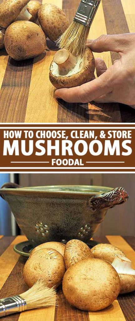 Mushrooms are a beloved ingredient for many dishes, adding a rich, umami flavor to vegetables, egg dishes, meats, and more. Easy to prepare, they unfortunately don't have an extensive shelf life once picked – but with the proper storage techniques, you can enjoy their fresh flavor for much longer. Join us now for a look at how to choose, clean, and store these tasty fungi!