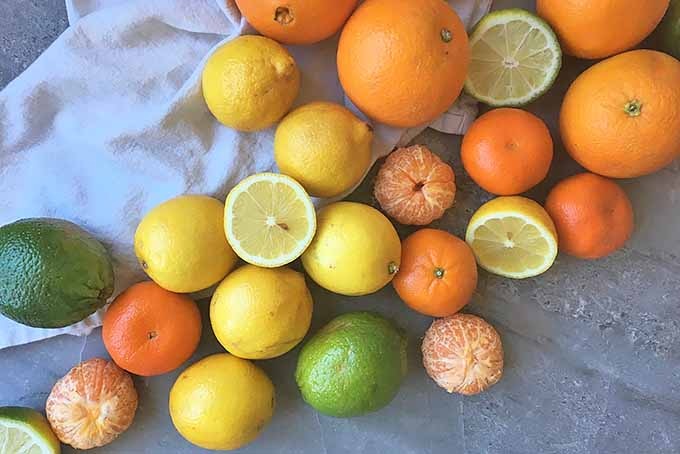 Fresh oranges, lemons, and limes.