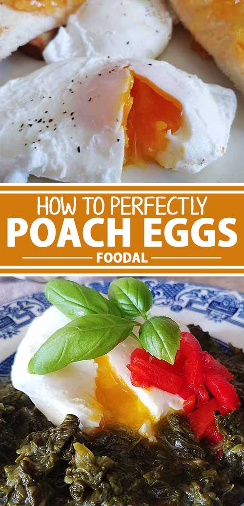How to Poach Eggs to Perfection