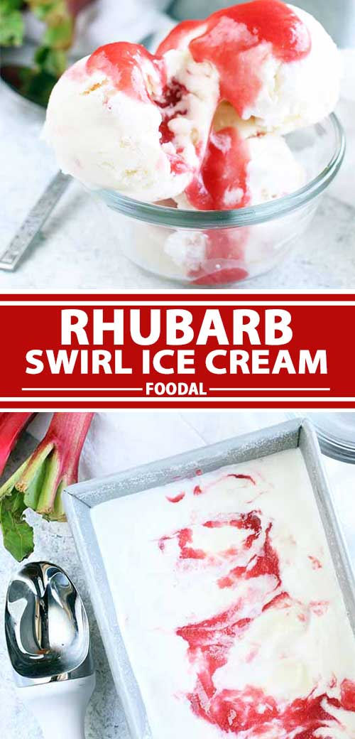 The creamiest dessert you'll try this summer is our Rhubarb Swirl Ice Cream. Rich, tart, and sweet with the flavors of vanilla and fresh seasonal produce, you won't believe how easy it is to make. The sauce is even delicious on its own. Read on to learn more about this frozen treat, and get the recipe now on Foodal. #icecream #rhubarb #frozentreats #foodal