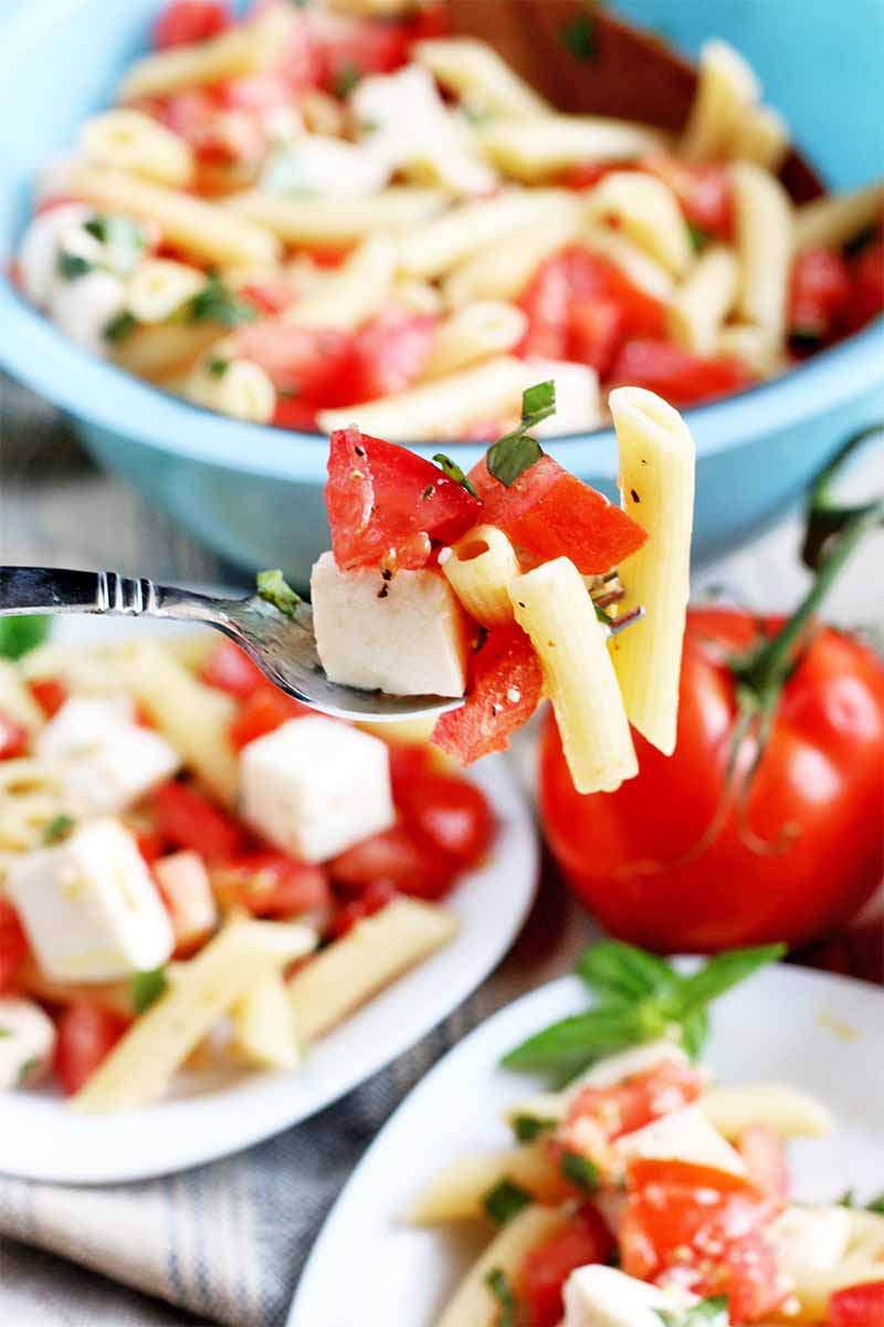 A forkful of pasta, mozzarella cheese, and fresh tomato is held up to the camera, with the rest of the fresh vegetable and macaroni salad in a blue bowl and on white plates in the background, with whole tomatoes on the vine and a folded cloth.