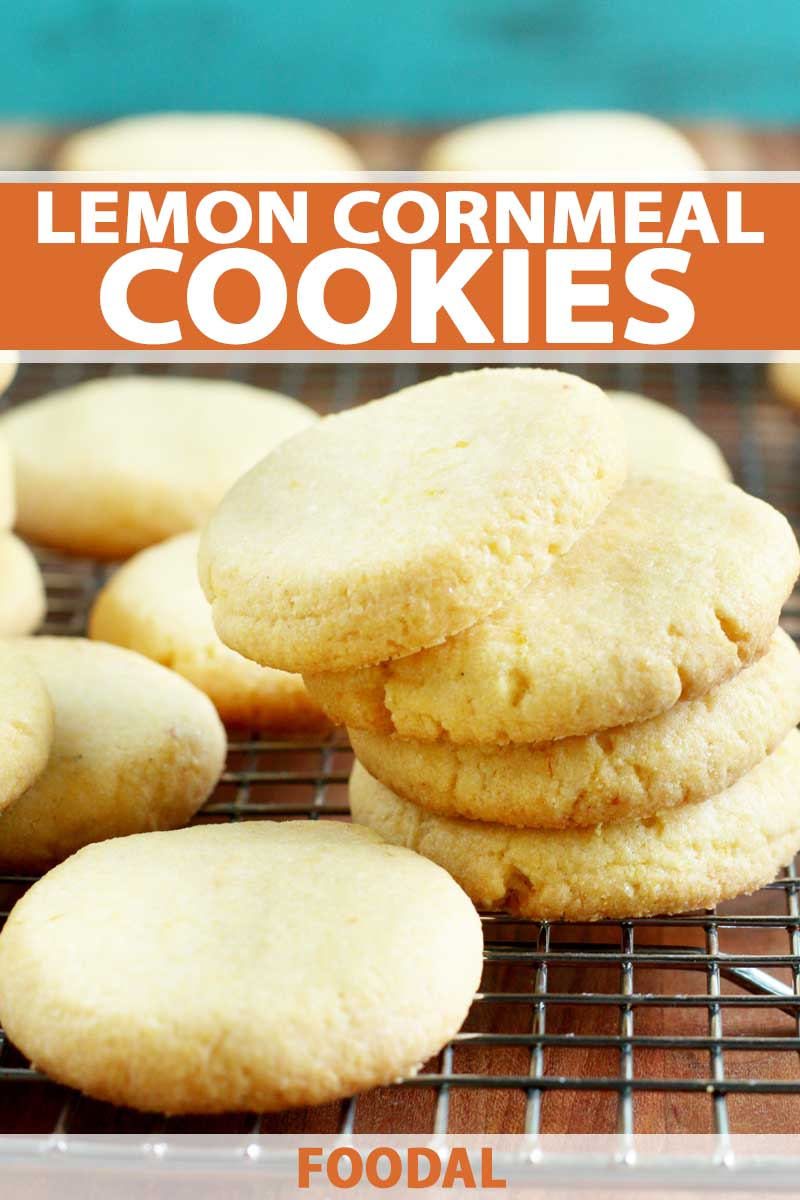 Looking for a light cookie to devour? You need to make our recipe for the best lemon cornmeal cookies as soon as possible. These citrus-infused cornmeal biscuits taste like shortbread, with a hearty texture and burst of tart flavor. Get the recipe now on Foodal. #cornmeal #lemoncookies #cookierecipe #lemon #foodal