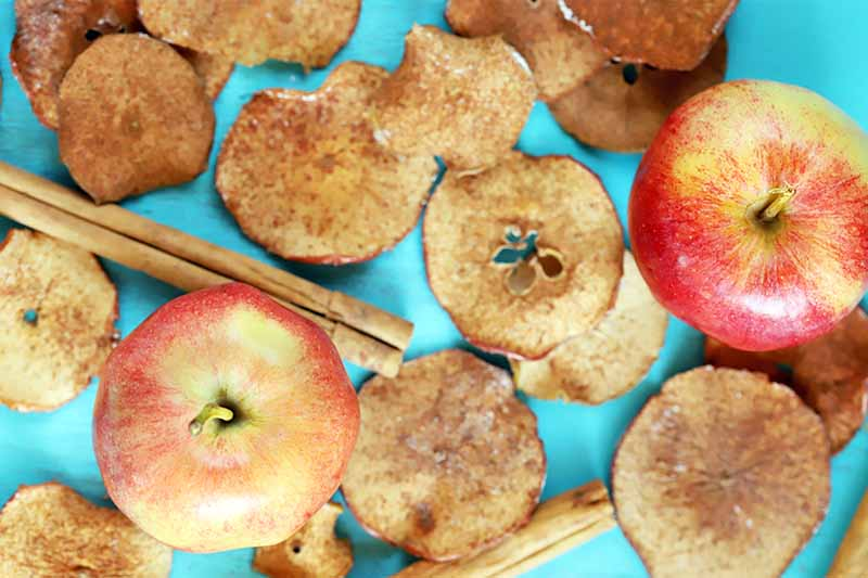 Overhead shot of homemade baked apple chips with two whole fruit and cinnamon sticks, on a vibrant blue background.