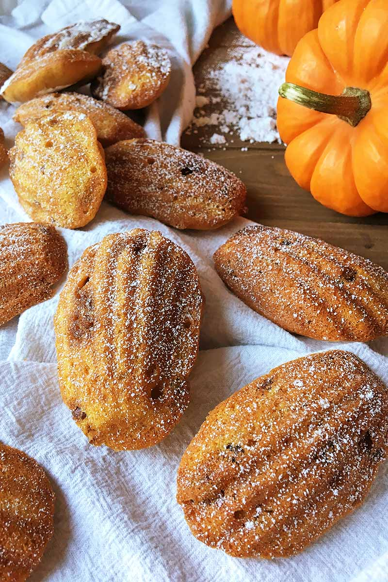 Vertical image of orange shell cakes on a white towel with pumpkins.