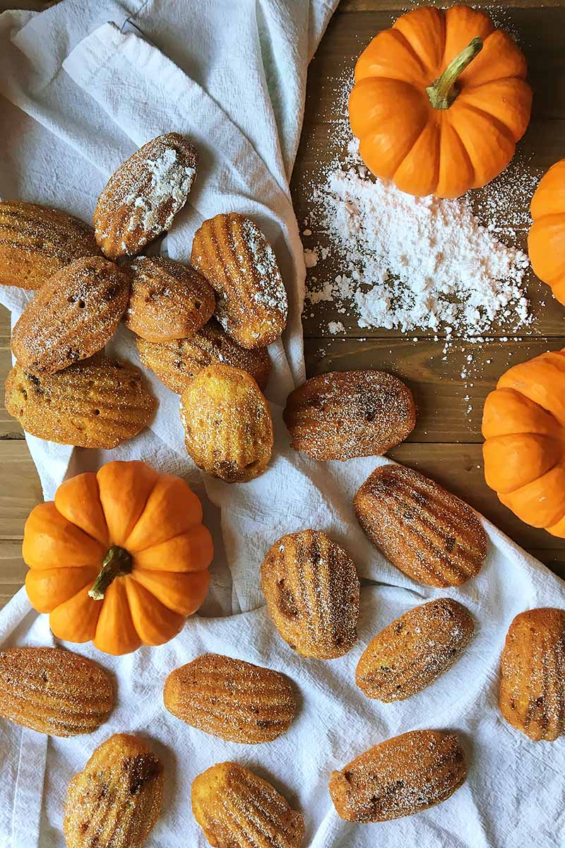 Top-down vertical image of pumpkin pecan madeleine cookies on a gathered white cloth, with mini orange pumpkins and a pile of powdered sugar on a brown wood surface.