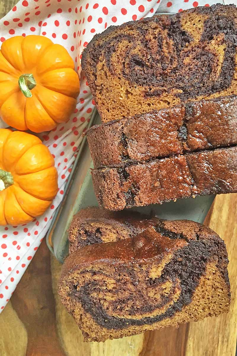 Vertical image of upright slices of pumpkin bread with chocolate swirls next to two mini pumpkins.