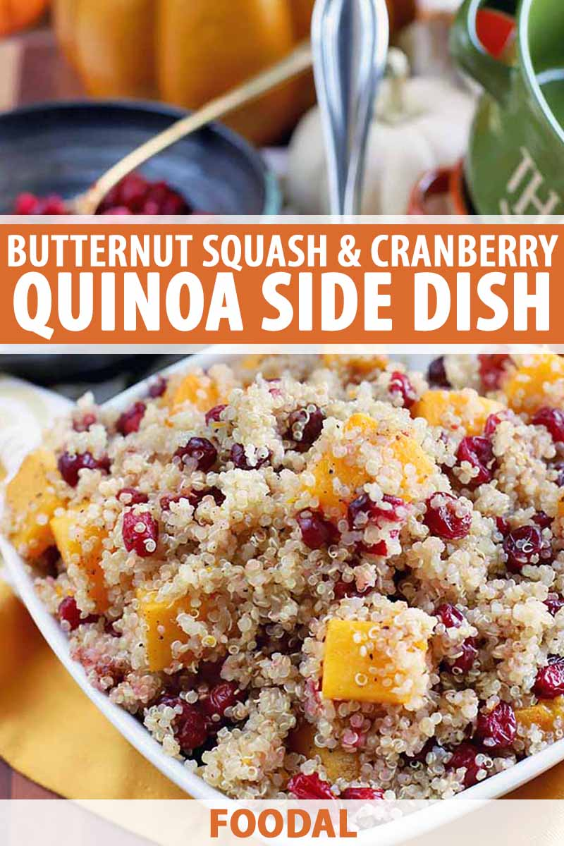 Vertical image of a square white serving dish of quinoa with cranberries and winter squash, with other dishes and a decorative pumpkin in the background, printed with orange and white text.