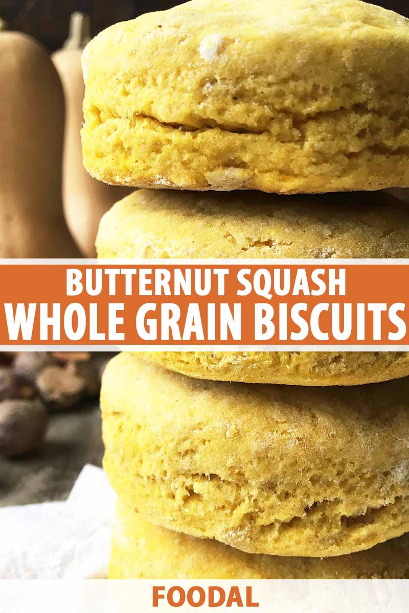 Vertical image of a stack of orange biscuits with text on a plain background.