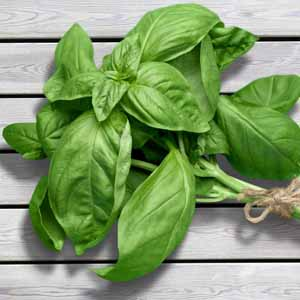 Fresh sweet basil leaves on a rustic wooden surface.