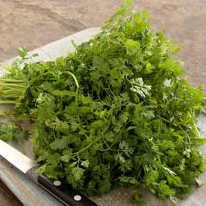 Close up of a bouquet of fresh chervil.