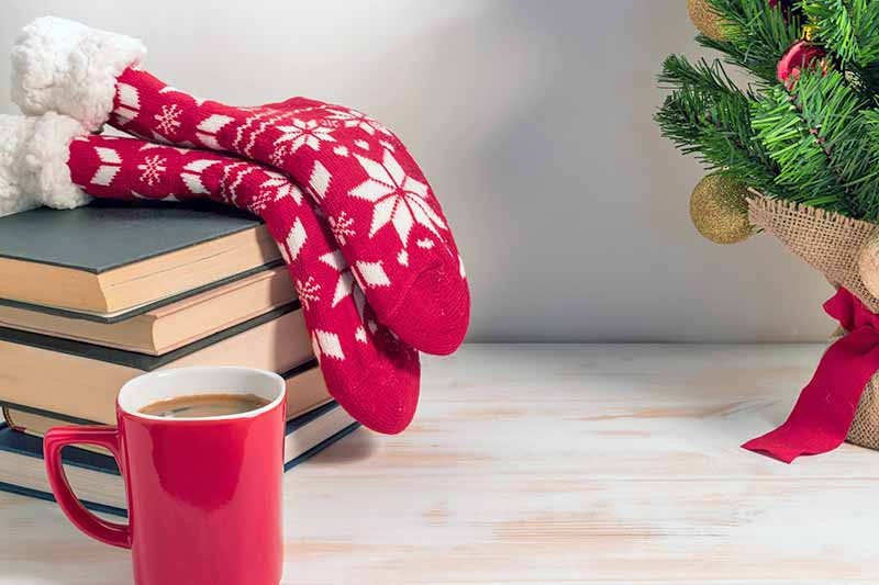 Two red and white stockings with a snowflake pattern are draped on top of a pile of hardback bugs, with a red mug of coffee in the foreground and a small decorated artificial Christmas tree with a red stand to the right, on a whitewashed wood surface against a white background.