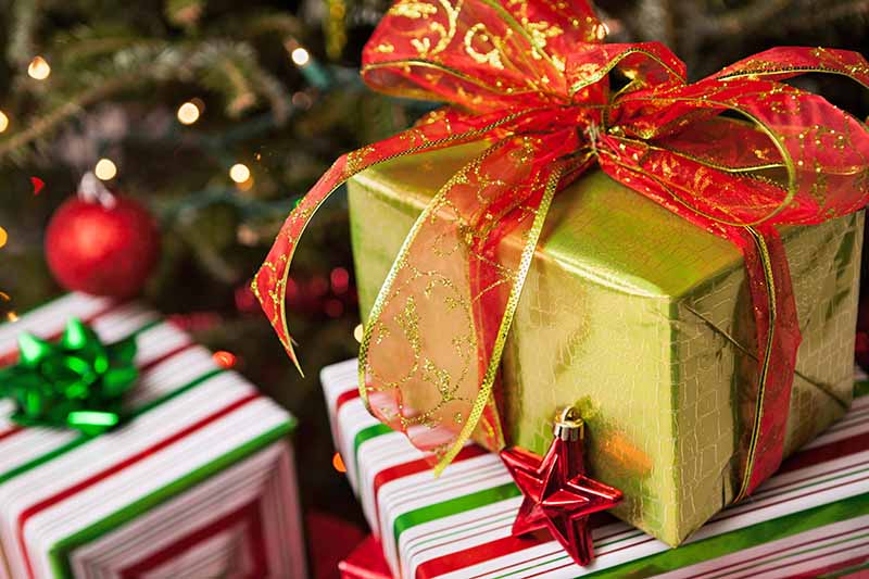 Closeup closely cropped image of holiday gifts wrapped in gold paper with red and gold ribbon, or striped red, white, and green paper with red and green ribbons, in front of a Christmas tree.