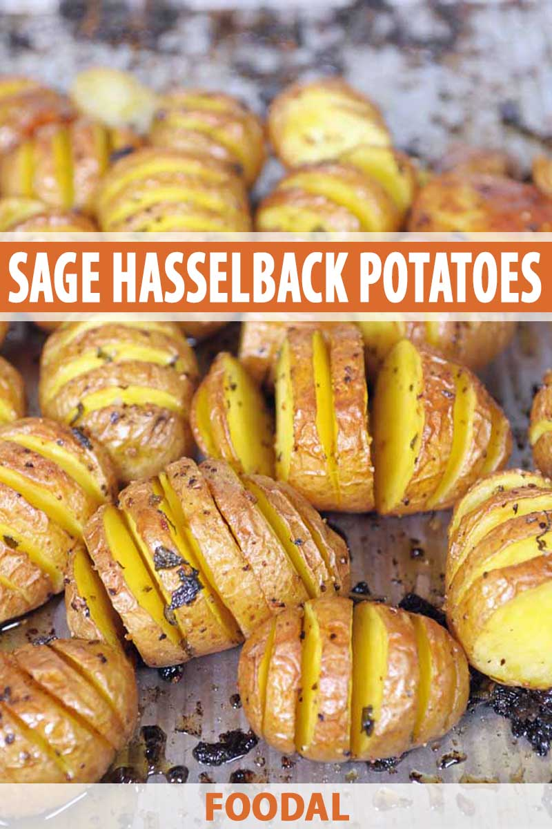 Closeup of sage hasselback potatoes in a baking pan.